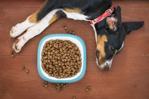 Guar Gum Supply Pet Food Manufacturers